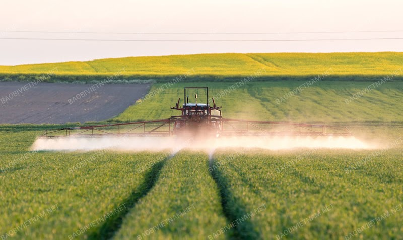 Phân bón góp phần thúc đẩy sự phát triển của nền nông nghiệp
