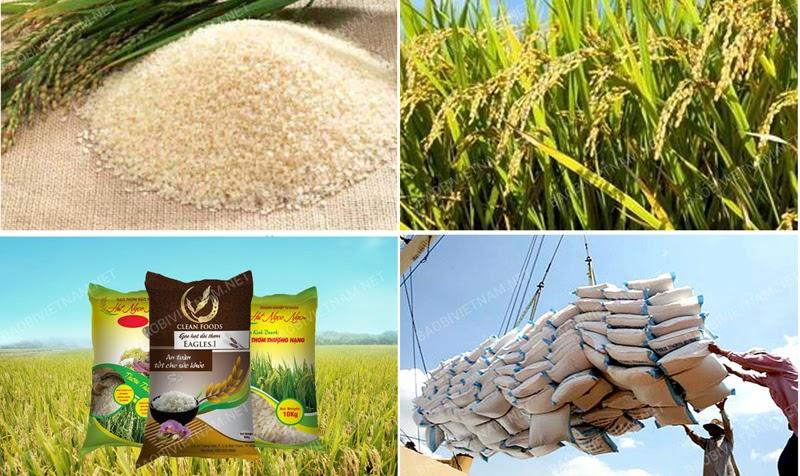 Bao bì đựng nông sản nâng tầm giá trị nông nghiệp